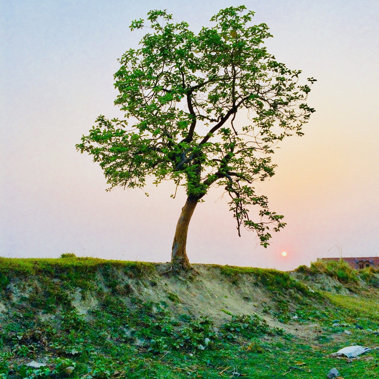 branches-countryside-environment-1067333